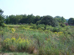 Buckingham Wetland.jpg