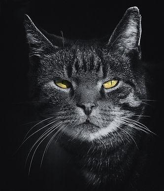 adorable-animal-animal-photography-41613