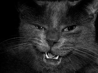 cat-2661884_1920.jpg