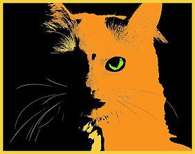 cat-2006457_1920.jpg