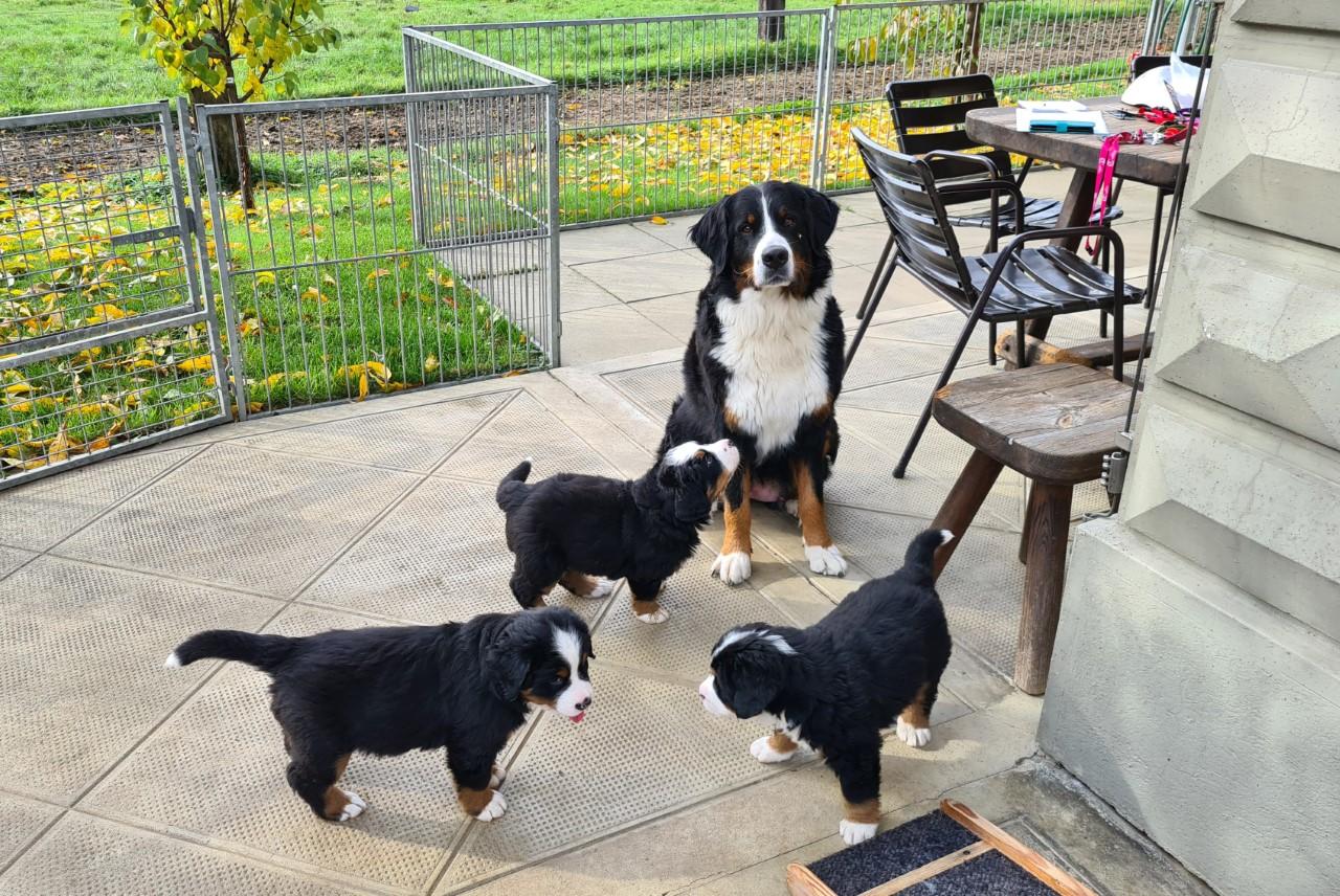 Zara mit Emma, Emerson und Ella-Bonnie