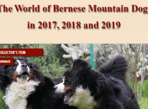 The World of Bernese Mountain Dogs 2017, 2018 und 2019