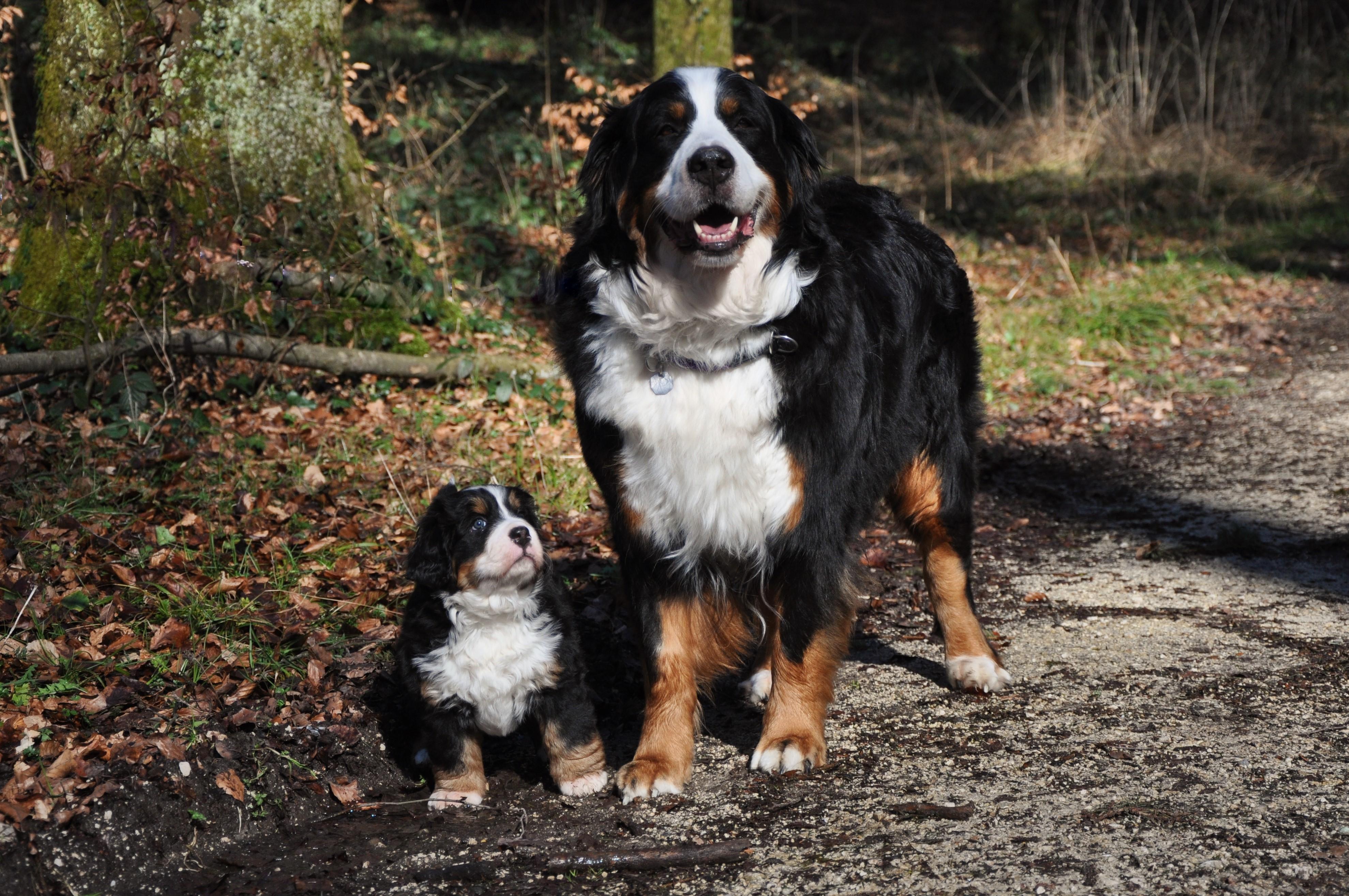 Donoma und Mama Odessa