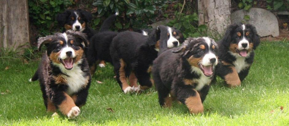 Information : Dogbase est en ligne