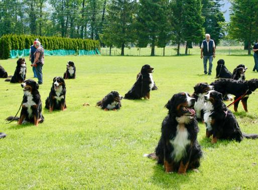 Hundetraining in Kleingruppen ab 11. Mai 2020 erlaubt