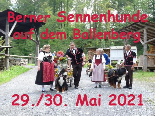 Les bouviers bernois se retrouvent au Musée en plein air de Ballenberg