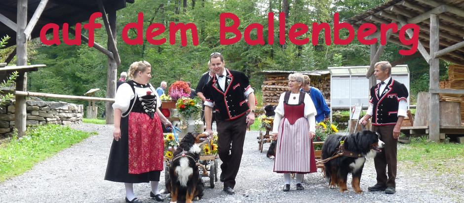 Berner Sennenhunde im Freilichtmuseum Ballenberg