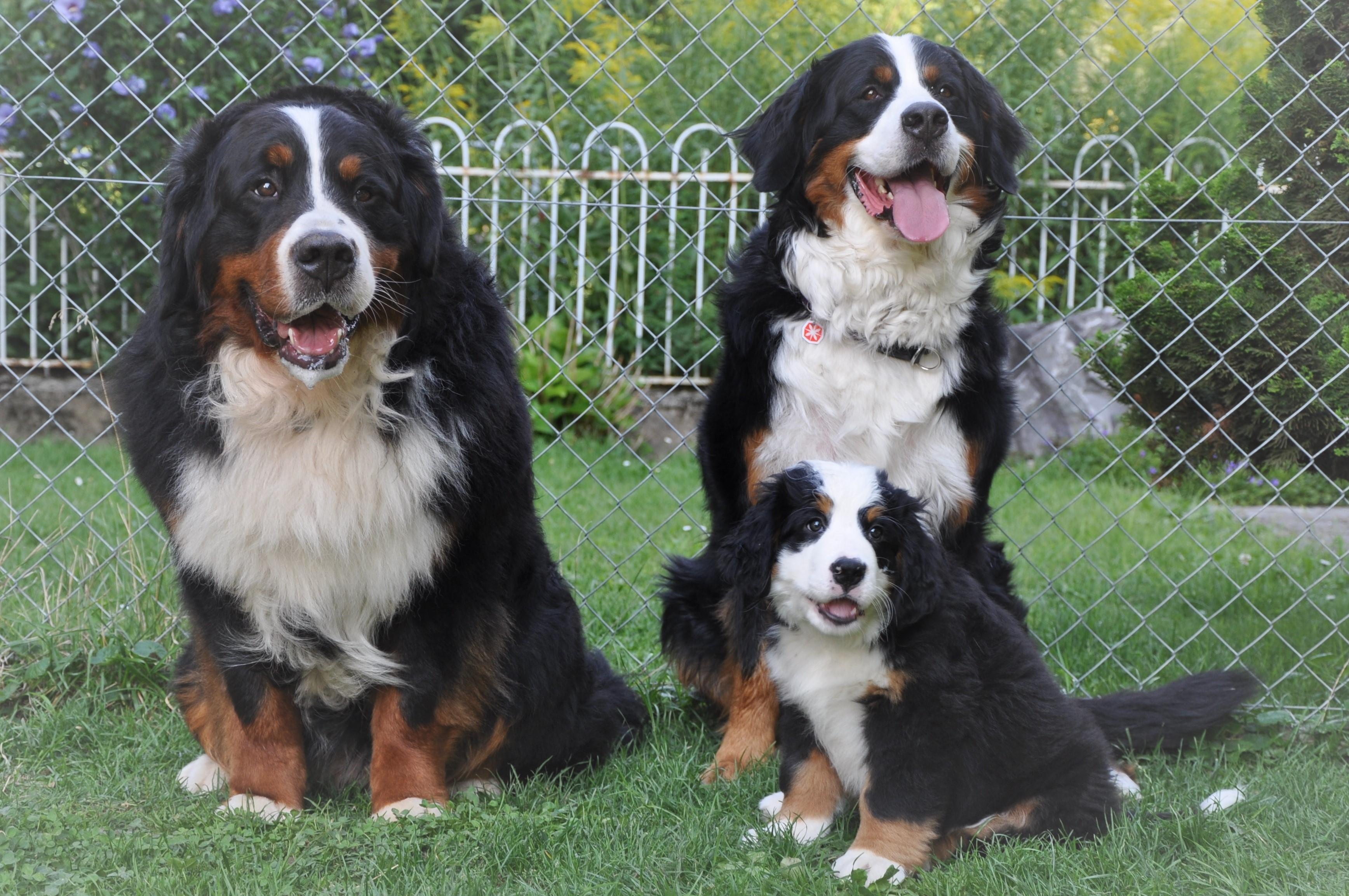 1. Rüde - Vito mit Eltern