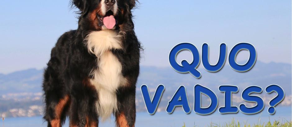 Quo Vadis? Der nächste Schritt