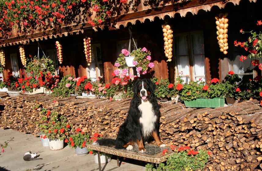 Hofhund-IMG_0562.jpg