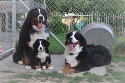 3. Hündin - Vanessa-Gina mit Eltern