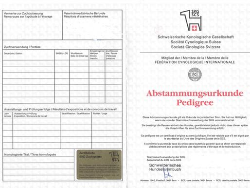 SKG Abstammungsurkunde – Gewähr für seriöse Zucht!
