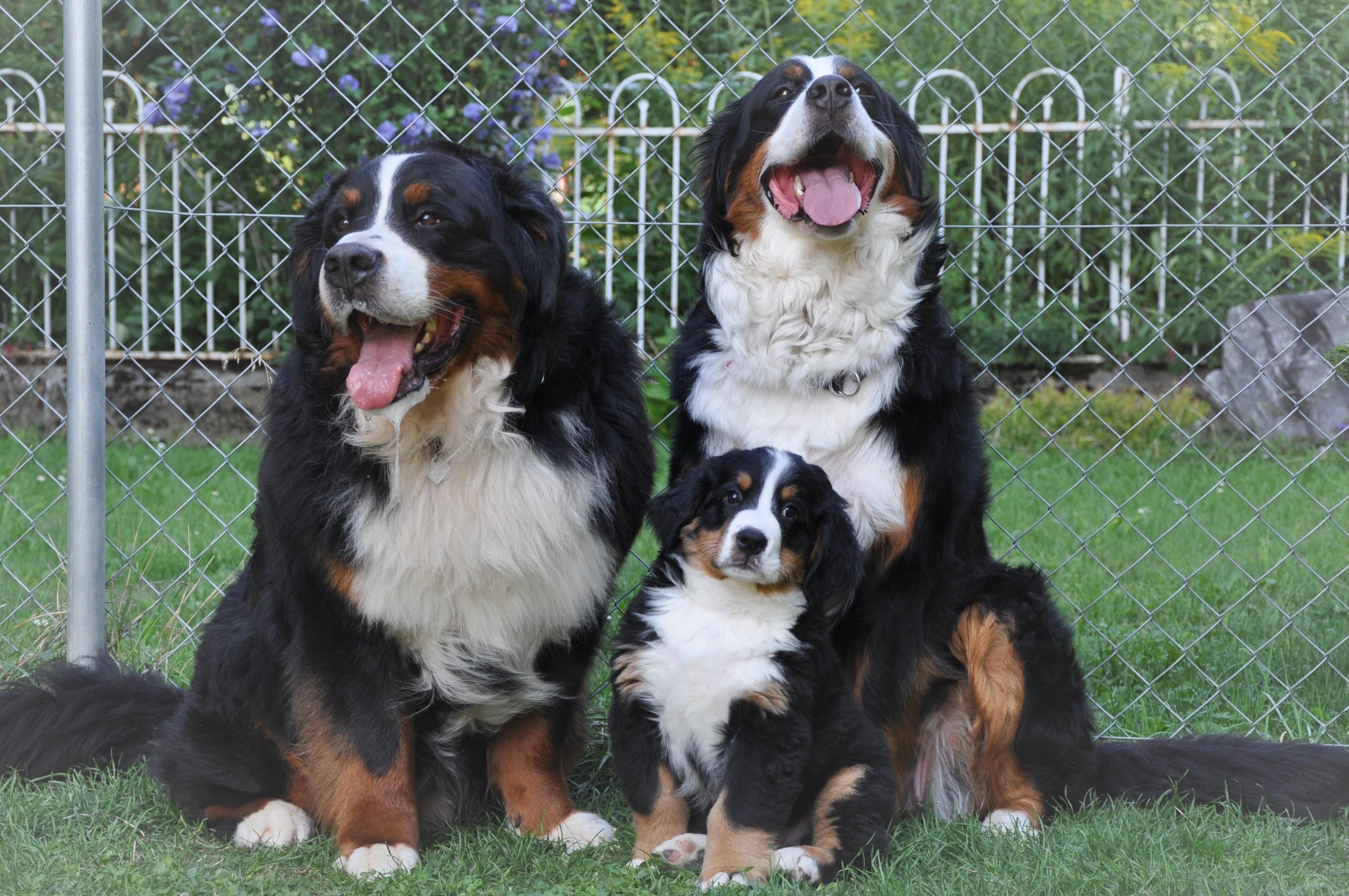 3. Rüde - Vasco mit Eltern