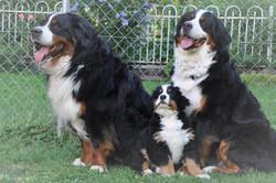 4. Rüde - Vincenzo mit Eltern