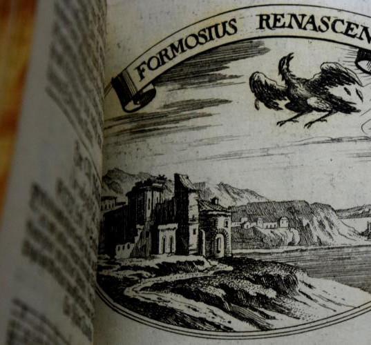 Formosius renascens