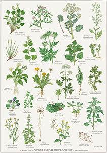Plakat: Spiselige vilde planter
