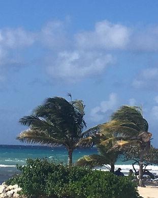 Palme på Jamaica