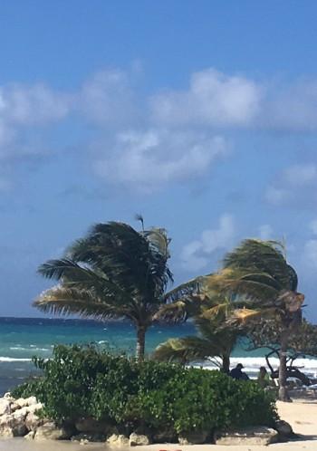 Palmer og vind på Jamaica