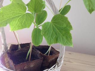 Økologiske planter