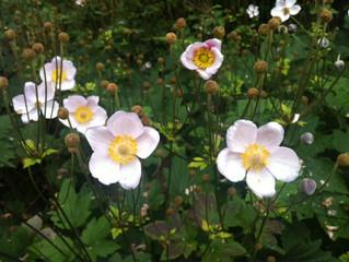 Blomsterbinding