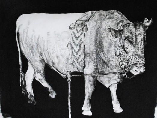 Turkish bull