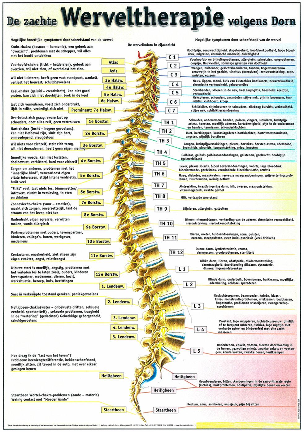 Dorn-therapie met een Breuss-massage