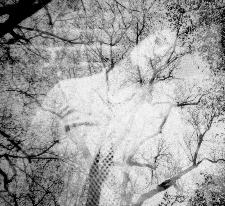 Fusion 3: Sleep on forest