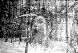 La forêt pleure