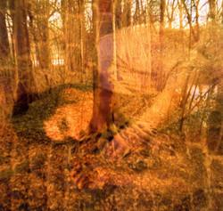 Souvenir d'une chute dans les bois