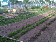 Planting time on the allotment