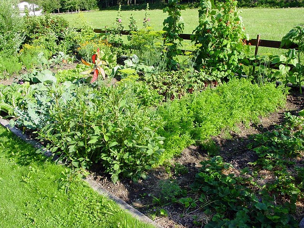 allotment-1059_640.jpg