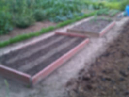 Using raised beds on the allotment