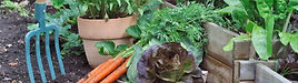 Fresh vegetables from the allotments