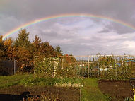 Rainbow over the allotments