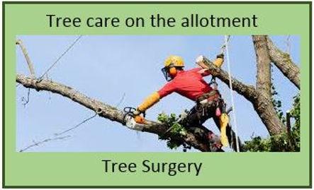 TreeCareLink.JPG