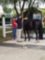 Måling_af_pony2.jpg