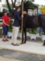 Måling_af_pony.jpg