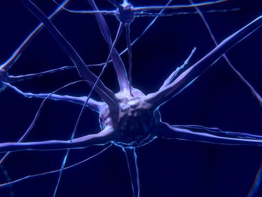 Nutrición celular: ¡es hora que tomes conciencia de tus células!