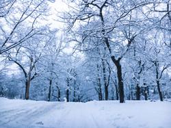 Snow covered residential street and trees, Spokane, WA USA
