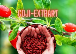 GOJI-EXTRAKT