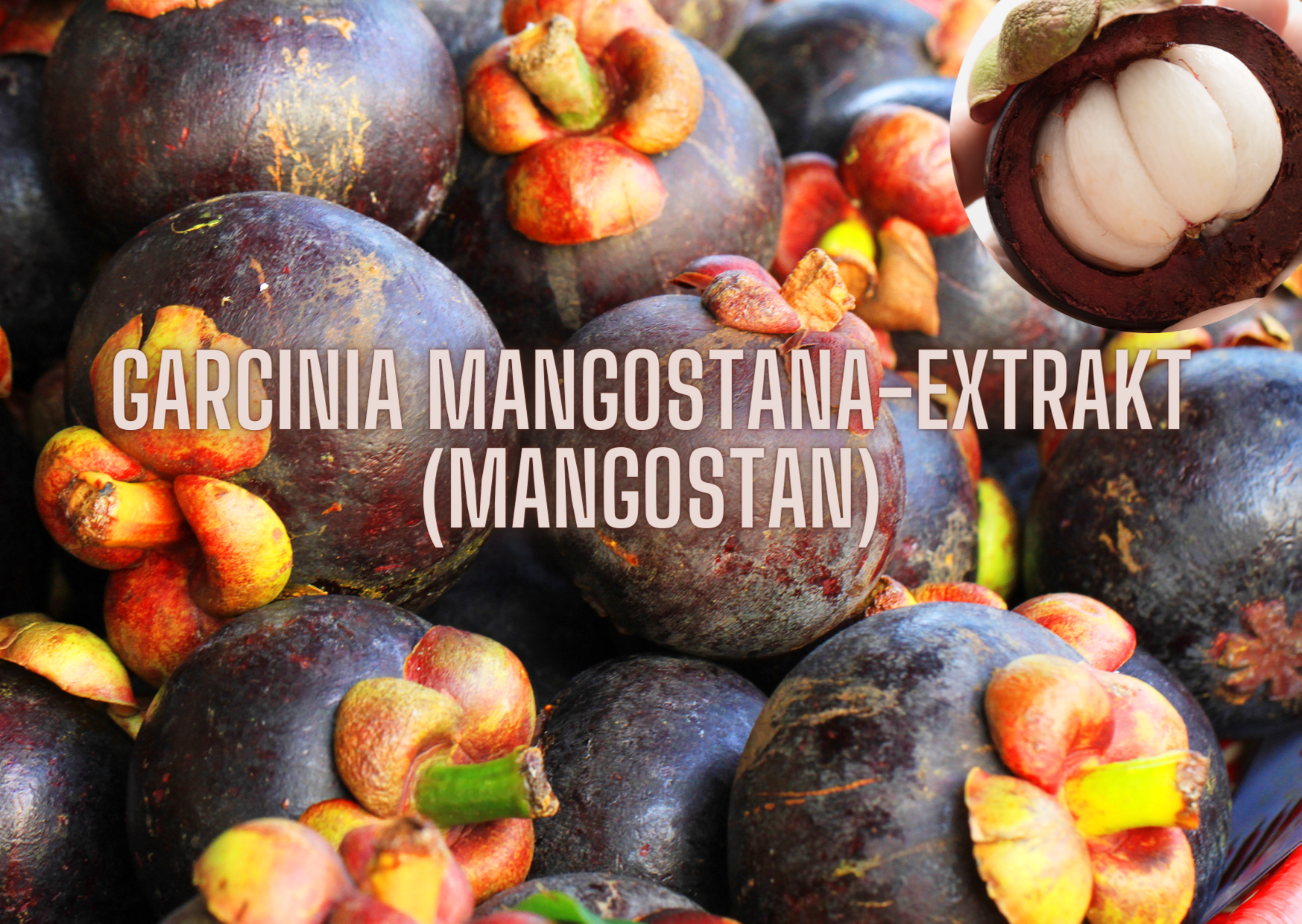 MANGOSTAN-EXTRAKT