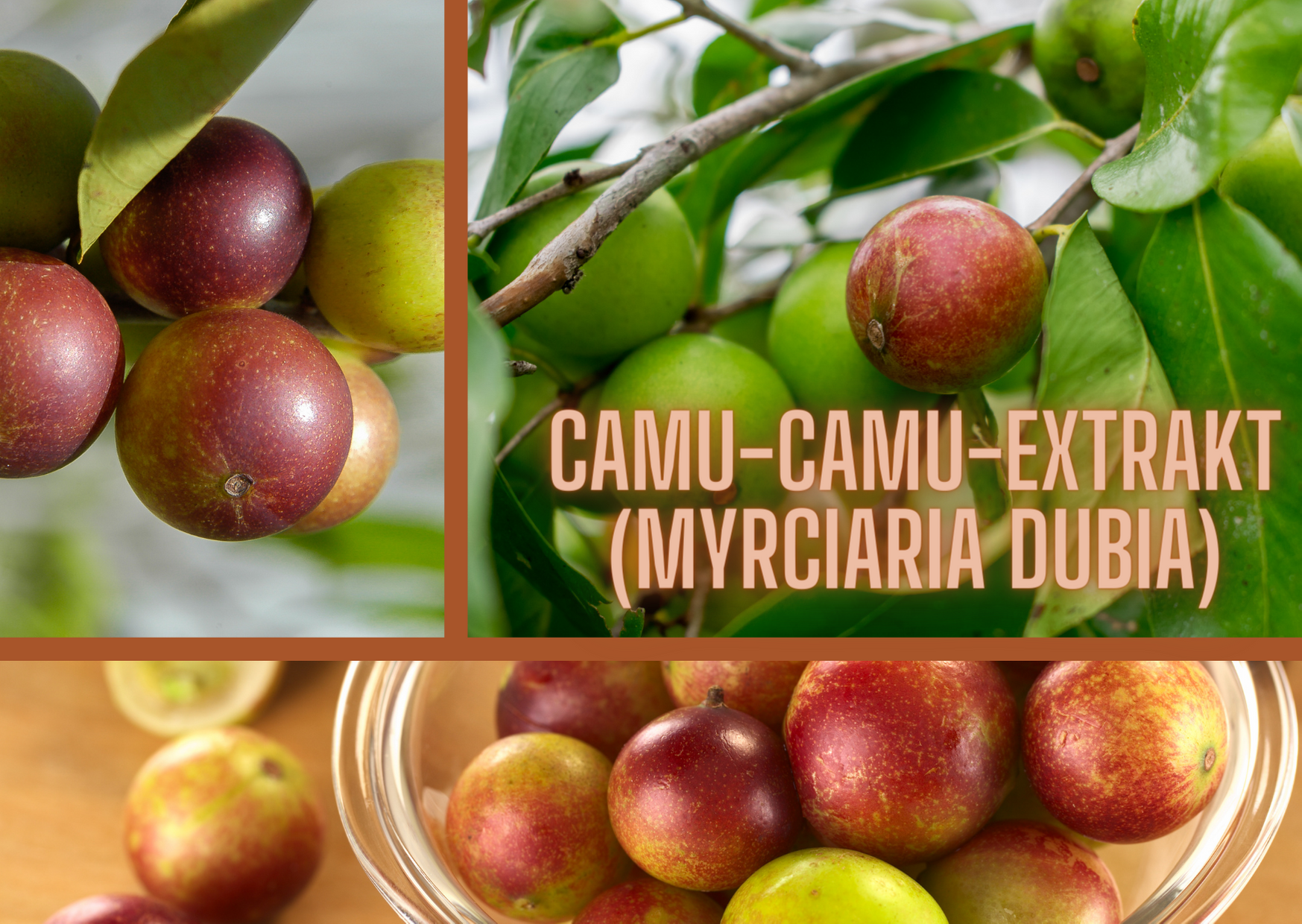 CAMU-CAMU-EXTRAKT