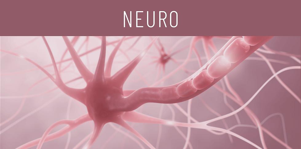 neuro-produktfamilie@2x.png