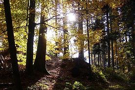 Wald_Emmental_fotokern.JPG