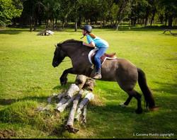 Art of Horsemanship LLC