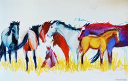 Members of the Herd