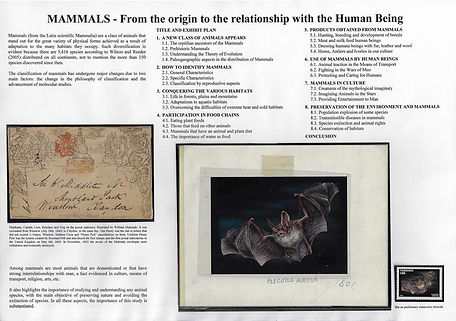 Mammals - From the Origin to The Relationship With the Human Being