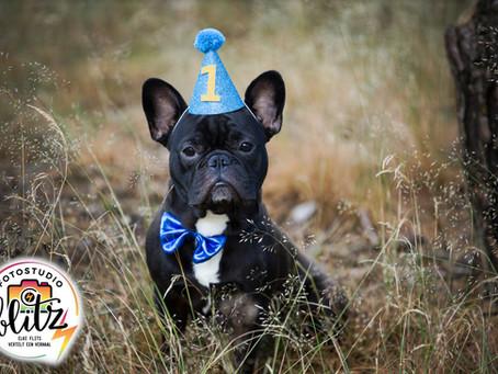 Hoera! Nacho 1 jaar!