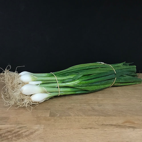 SPRING ONION (BUNCH) - UK
