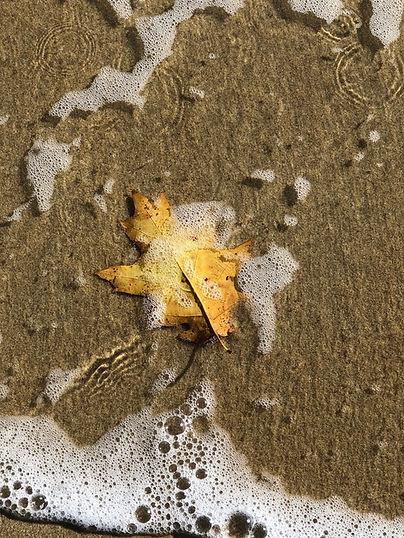 Leaf in Water.jpeg